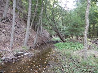 Photo 10: Tanner Hill Road in Limerock: 108-Rural Pictou County Vacant Land for sale (Northern Region)  : MLS®# 202121301