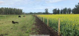 Photo 1: TWP 59 RR271: Rural Westlock County Rural Land/Vacant Lot for sale : MLS®# E4227348