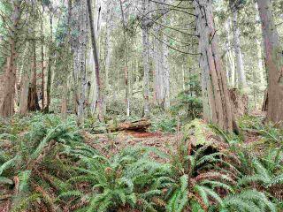 Photo 16: Lot 1 DL 3043: Keats Island Land for sale (Sunshine Coast)  : MLS®# R2554223