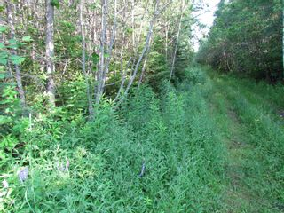 Photo 3: 236 Highway Highway in Kennetcook: 105-East Hants/Colchester West Vacant Land for sale (Halifax-Dartmouth)  : MLS®# 202116831