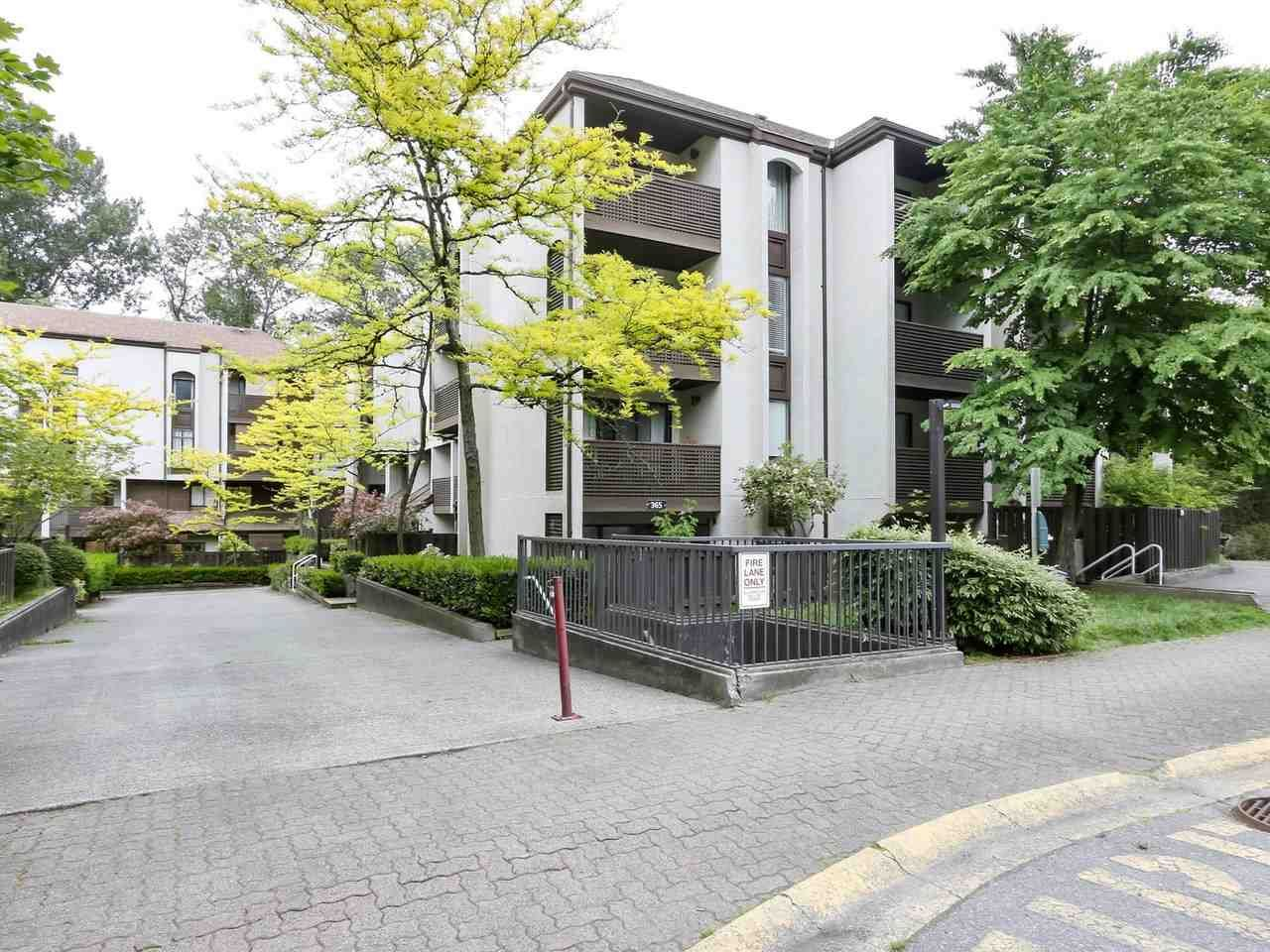 """Main Photo: 15 365 GINGER Drive in New Westminster: Fraserview NW Townhouse for sale in """"Fraser Mews"""" : MLS®# R2458131"""