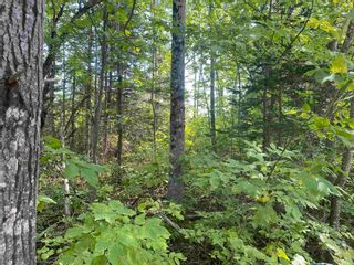 Photo 5: Lot Manse Road in Kenzieville: 108-Rural Pictou County Vacant Land for sale (Northern Region)  : MLS®# 202122852