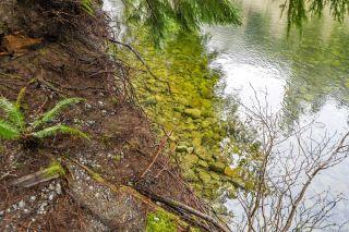 Photo 33: NE1/4SEC15 Gordon River Rd in Port Renfrew: Sk Port Renfrew Land for sale (Sooke)  : MLS®# 864408