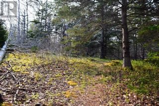 Photo 13: Old Kettle Road in Port Medway: Vacant Land for sale : MLS®# 202113253