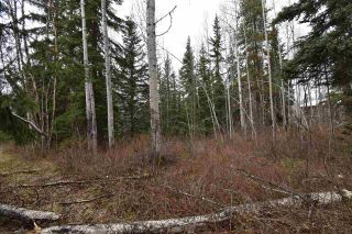 Photo 21: 5024 LAUGHLIN Road in Smithers: Smithers - Rural House for sale (Smithers And Area (Zone 54))  : MLS®# R2573882