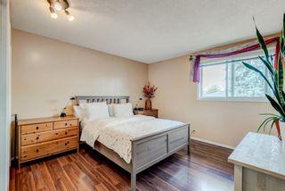 Photo 14: 114 Pinetree Bay NE in Calgary: Pineridge Detached for sale : MLS®# A1151101