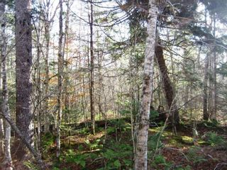 Photo 5: Lot Highway 107 in West Petpeswick: 35-Halifax County East Vacant Land for sale (Halifax-Dartmouth)  : MLS®# 202114068