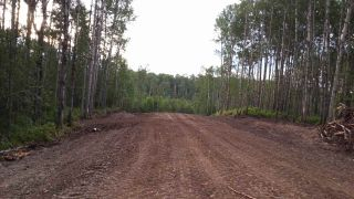 Photo 7: TWP RD 633 A Rge Rd 261A: Rural Westlock County Rural Land/Vacant Lot for sale : MLS®# E3283338