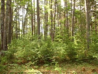 Photo 10: Lot 11 RAFUSE POINT Road in Pleasantville: 405-Lunenburg County Vacant Land for sale (South Shore)  : MLS®# 202100151