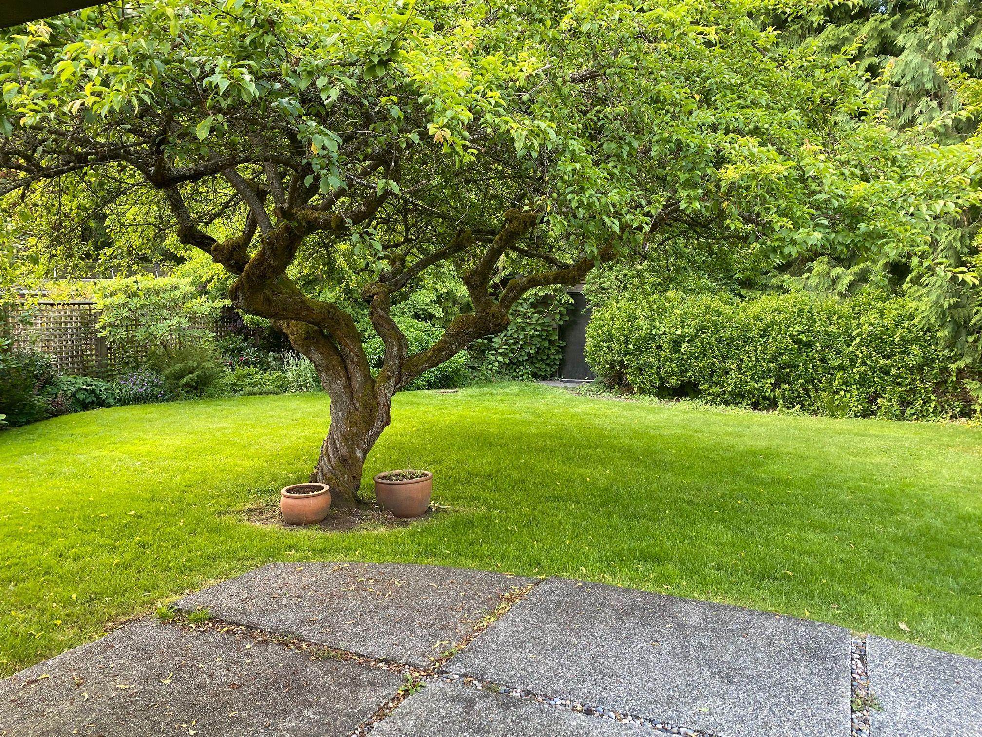 Photo 18: Photos: 3929 Sunset Boulevard in North Vancouver: Edgemont House for rent
