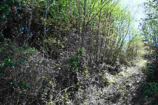 Photo 10: Lot 6 SANDY HOOK Road in Sechelt: Sechelt District Land for sale (Sunshine Coast)  : MLS®# R2569863