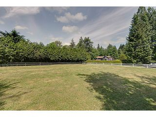 Photo 38: 25990 116TH Avenue in Maple Ridge: Websters Corners House for sale : MLS®# V1097441