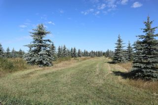 Photo 9: Hwy 622 RR 15: Rural Leduc County Rural Land/Vacant Lot for sale : MLS®# E4261453