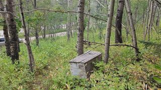 Photo 19: Winchell Lake Road Lot 2, TWP Road 290A: Rural Mountain View County Detached for sale : MLS®# C4200686