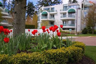 """Photo 13: 201 1705 MARTIN Drive in Surrey: Sunnyside Park Surrey Condo for sale in """"Southwynd"""" (South Surrey White Rock)  : MLS®# F1404633"""