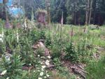 Property Photo: LOT D MAPLE PLACE in Gambier Island