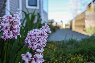 Photo 2: A 2491 Willemar Ave in : CV Courtenay City Half Duplex for sale (Comox Valley)  : MLS®# 873265
