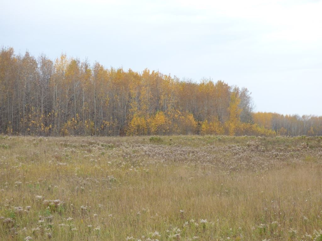 Photo 18: Photos: N1/2 SE19-57-1-W5: Rural Barrhead County Rural Land/Vacant Lot for sale : MLS®# E4217154