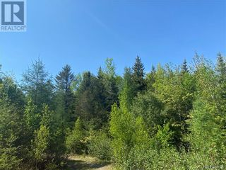 Photo 34: 74.62 Acres Route 127 in Bayside: Vacant Land for sale : MLS®# NB058351