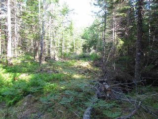 Photo 8: 236 Highway Highway in Kennetcook: 105-East Hants/Colchester West Vacant Land for sale (Halifax-Dartmouth)  : MLS®# 202116831