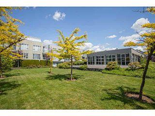 "Photo 11: 209 8620 JONES Road in Richmond: Brighouse South Condo for sale in ""Sunnyvale"" : MLS®# V1066569"