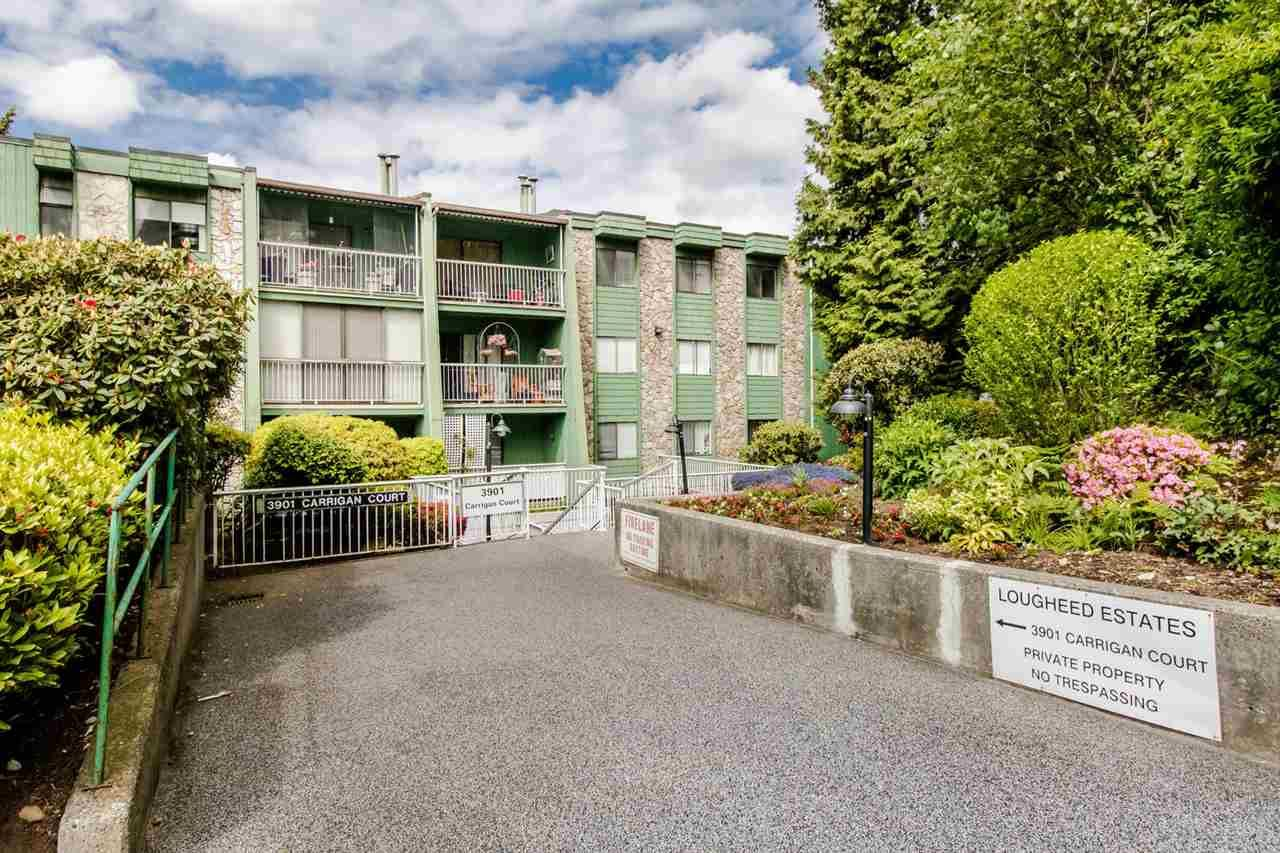 "Main Photo: 117 3901 CARRIGAN Court in Burnaby: Government Road Condo for sale in ""Lougheed Estates 11"" (Burnaby North)  : MLS®# R2457255"