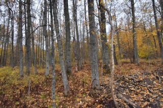 Photo 10: #9 North Pigeon Lake Estates: Rural Wetaskiwin County Rural Land/Vacant Lot for sale : MLS®# E4265016