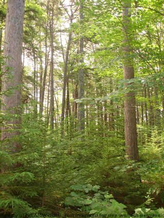 Photo 13: Lot 11 RAFUSE POINT Road in Pleasantville: 405-Lunenburg County Vacant Land for sale (South Shore)  : MLS®# 202100151