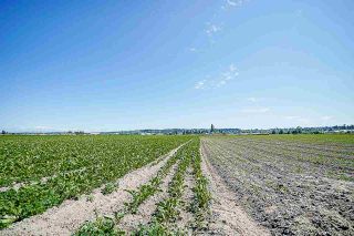 Photo 13: 16397 40 Avenue in Surrey: Serpentine Agri-Business for sale (Cloverdale)  : MLS®# C8038664