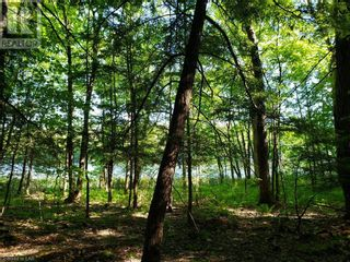 Photo 20: 8801 SEVERN RIVER in Orillia: Vacant Land for sale : MLS®# 40120545