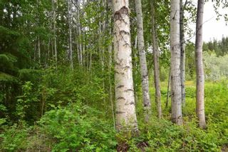 Photo 19: DL 1335A 37 Highway: Kitwanga Land for sale (Smithers And Area (Zone 54))  : MLS®# R2471833
