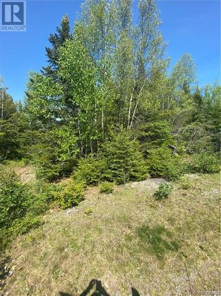 Photo 33: 74.62 Acres Route 127 in Bayside: Vacant Land for sale : MLS®# NB058351