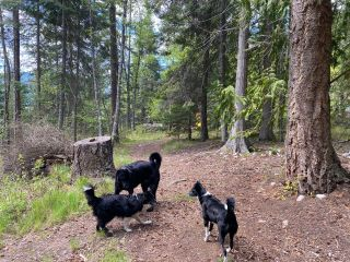 Photo 6: LOT 2 HIGHWAY 3A in Nelson: Vacant Land for sale : MLS®# 2455415