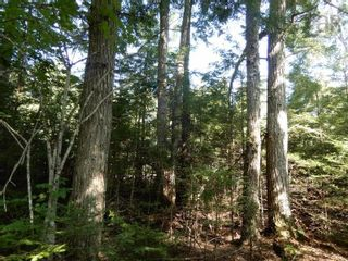 Photo 4: Watt Road in Hedgeville: 108-Rural Pictou County Vacant Land for sale (Northern Region)  : MLS®# 202122216