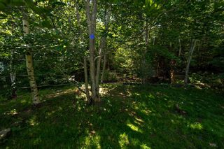 Photo 6: 61 CASSANDRA Drive in Dartmouth: 15-Forest Hills Residential for sale (Halifax-Dartmouth)  : MLS®# 202117758