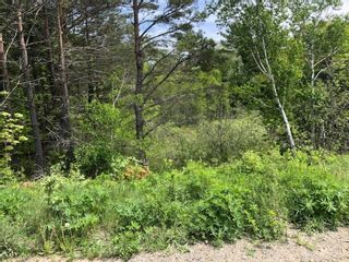 Photo 11: Lot Morganville Road in Morganville: 401-Digby County Vacant Land for sale (Annapolis Valley)  : MLS®# 202105239