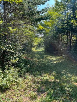 Photo 12: 1373 West Sable Road in Sable River: 407-Shelburne County Vacant Land for sale (South Shore)  : MLS®# 202122222