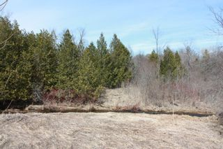 Photo 7: 2nd Line in Roseneath: Land Only for sale : MLS®# 188329