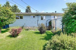 Photo 44: 48 DOVERTHORN Place SE in Calgary: Dover Detached for sale : MLS®# A1023255