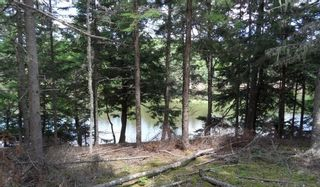 Photo 9: LOT 07-8 Lot07-8 KERRS MILLS Road in Wallace River West: 103-Malagash, Wentworth Vacant Land for sale (Northern Region)  : MLS®# 5161969