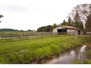 Photo 31: 15146 HARRIS Road in Pitt Meadows: North Meadows House for sale : MLS®# V899524