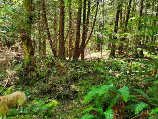 "Photo 16: Lot 49 FLINT Road: Keats Island Land for sale in ""10 Acres"" (Sunshine Coast)  : MLS®# R2460996"