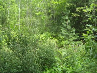 Photo 8: 12 Stampede Trail in Anglemont: Land Only for sale : MLS®# 10031134