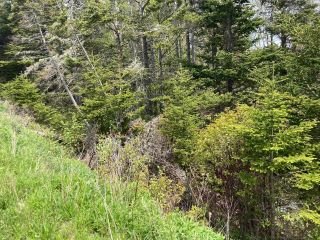 Photo 12: Lot Mushaboom Road in Mushaboom: 35-Halifax County East Vacant Land for sale (Halifax-Dartmouth)  : MLS®# 202114485
