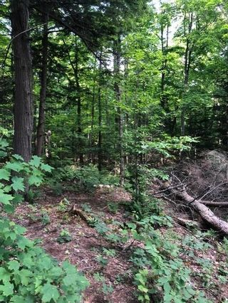 Photo 7: A 790 Garage Road in Burk's Falls: Vacant Land for sale : MLS®# H4112135