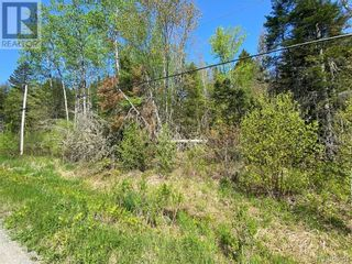 Photo 14: 5264 Rte 770 in Rollingdam: Vacant Land for sale : MLS®# NB058269