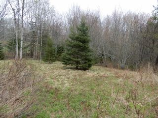 Photo 3: Highway 4 in Salt Springs: 108-Rural Pictou County Vacant Land for sale (Northern Region)  : MLS®# 202111268