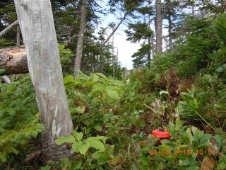 Photo 18: Lot 03-1A Highway 7 in Marie Joseph: 303-Guysborough County Vacant Land for sale (Highland Region)  : MLS®# 201917799