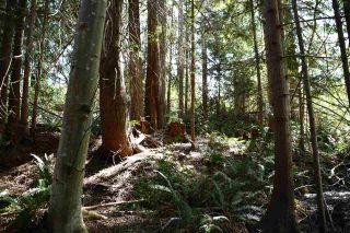 Photo 8: Lot 6 SANDY HOOK Road in Sechelt: Sechelt District Land for sale (Sunshine Coast)  : MLS®# R2569863