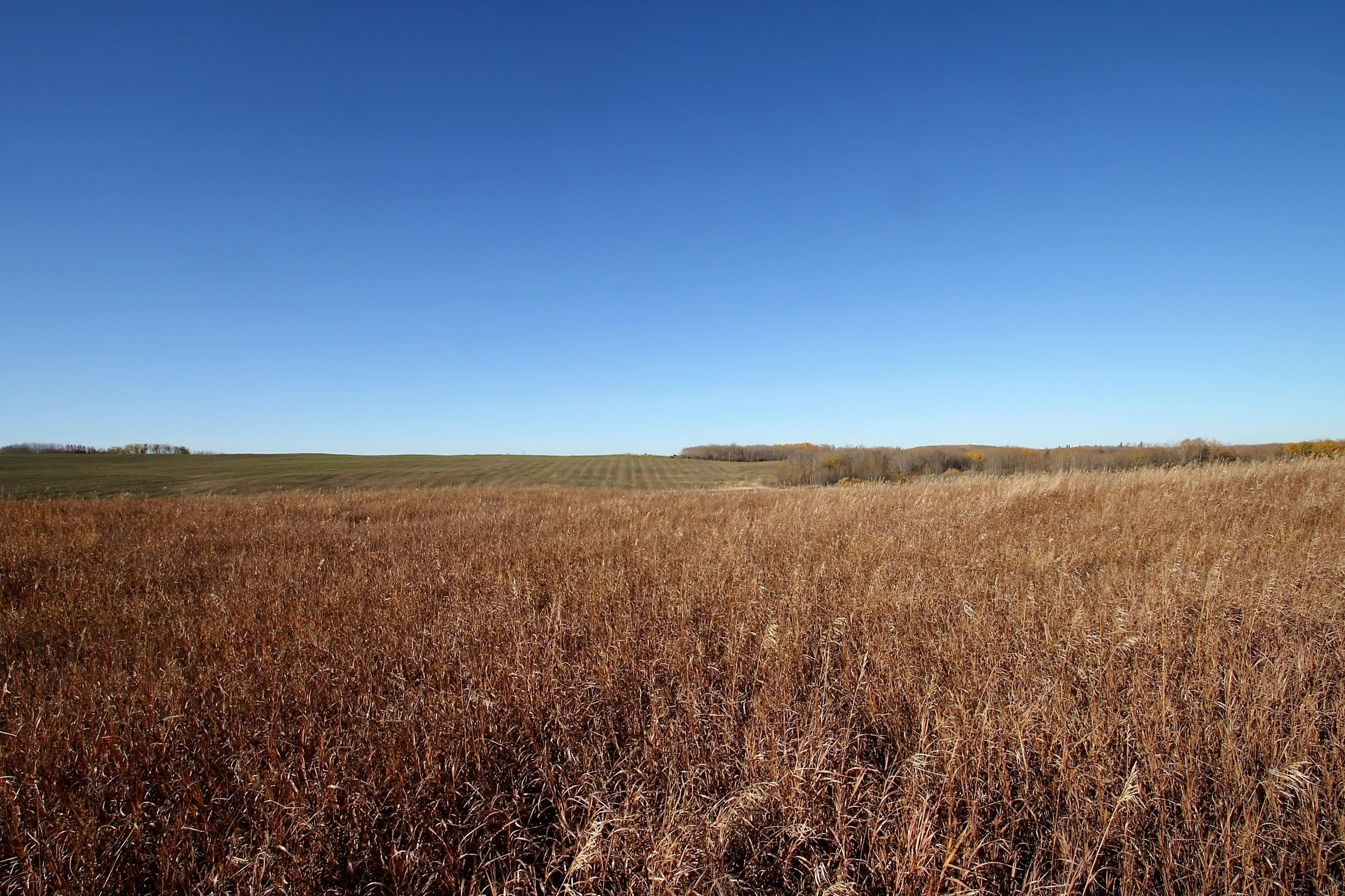 Main Photo: 59216 Rg Rd 95A: Rural St. Paul County Rural Land/Vacant Lot for sale : MLS®# E4266221